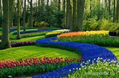 Лесной сад на собственном участке